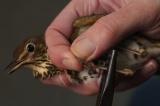 Δακτυλιώσεις πτηνών στον Εθνικό ΔρυμόΟλύμπου