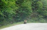 Συνάντηση με την….αρκούδα στο δρόμο τηςΒωβούσας!