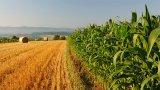 Οικονομική ενίσχυση σε νέους ως 40 ετών για ενασχόληση με τον αγροτικότομέα
