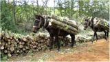 Καθυστέρηση των πληρωμών προς τους δασικούςσυνεταιρισμούς