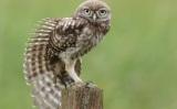 Αθόρυβες ανεμογεννήτριες μιμούνται τα φτερά τηςκουκουβάγιας