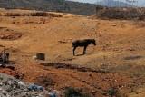 Κατάσχεση ιπποειδών και απελευθέρωση δεκάδων άγριωνπουλιών