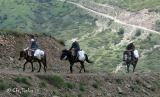 Αλβανοί αποψιλώνουν τα αρωματικά φυτά στοΓράμμο