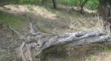 Το «πέτρινο» δάσος τηςΡαψάνης