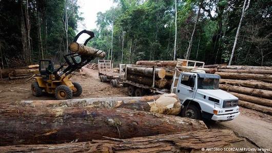YLOTOMIA AMAZONIOS TROPIKO DASOS