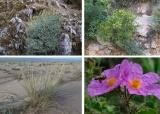 Ανοιχτή εκδήλωση: «Χρήση της τοπικής χλωρίδας για έργα πρασίνου &αποκατάστασης»