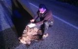 Αρκουδάκι σκοτώθηκε σετροχαίο