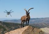 Drone βοηθούν αγριοκάτσικα στηνΙσπανία
