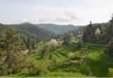 Εγκαταλελειμμένοι ορεινοί οπωρώνες: ένας ξεχασμένος αλλά πολύτιμοςοικότοπος