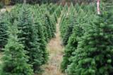 Η διαδρομή του χριστουγεννιάτικου δέντρου