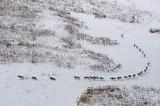 ΚΑΛΛΙΣΤΩ: Για την φωτογραφία με τους λύκους που έγινεviral