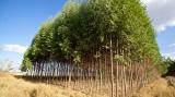 Δάσωση γεωργικών γαιών: 7,5 εκατ. ευρώ για καταβολή οικονομικώνενισχύσεων