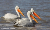Σκοποβολή σε παγκοσμίως απειλούμενα είδη στο ΔέλταΈβρου