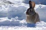 Κυνήγι στο χιόνι