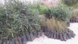 Διάθεση δασικών δενδρυλλίων από την Δ/νση ΔασώνΚυκλάδων