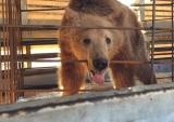 Τρία αρκουδάκια από την Αλβανία στο καταφύγιο του«Αρκτούρου»