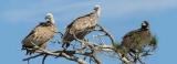 Διαβούλευση για το σχέδιο Π.Δ. του Εθνικού Πάρκου Δάσους Δαδιάς – Λευκίμης–Σουφλίου