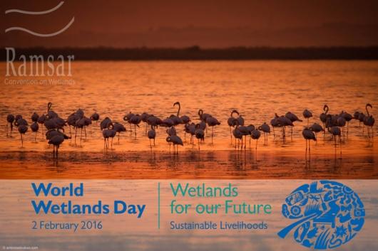 Wetlands_day1
