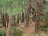 Προκήρυξη τακτικού μειοδοτικού διαγωνισμού για το περιαστικό δάσοςΞάνθης