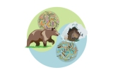 Τα βακτήρια του εντέρου «ρίχνουν» τις αρκούδες σε χειμέριούπνο