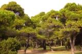 Συγκρότηση Συμβουλίων Ιδιοκτησίας Δασών (Σ.Ι.Δ.) με έδρα την Αθήνα και τονΠειραιά