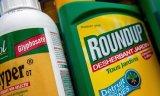 Stop στη νέα ευρωπαϊκή αδειοδότηση του παρασιτοκτόνουRoundup