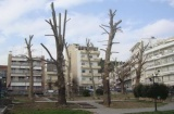 Δέντρων κλαδέματα: Μια πονεμένηιστορία