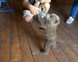 Βρέθηκε ένα όμορφο αρκουδάκι στην Καστοριά (φωτογραφίες –βίντεο)