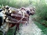 Σύλληψη αλλοδαπού σε περιοχή της Καστοριάς για παράβαση της δασικήςνομοθεσίας