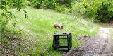 Δύσκολη αποδείχθηκε η άγρια ζωή για τον μικρό Πάτρικ(vid)