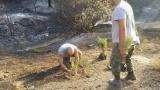 Κύπρος: Το Τμήμα Δασών προειδοποιεί για τις ανεξέλεγκτες δενδροφυτεύσεις στην καμένηγη