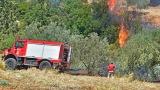 Σε ύφεση η πυρκαγιά στο Εθνικό Πάρκο Δαδιάς-Λευκίμης-Σουφλίου