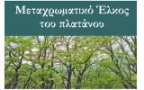 Ημερίδα: «Μεταχρωματικό Έλκος του Πλατάνου – Η ασθένεια που απειλεί τα πλατανοδάσημας»