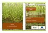 Διημερίδα: «Φυτείες Ταχυαυξών Δασικών Ειδών Μικρού Περίτροπου Χρόνου για παραγωγή βιομάζας για θερμικέςχρήσεις»