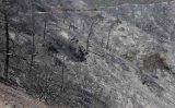 Αποκατάσταση και αναδάσωση της καμένης δασικής περιοχής στηΣολέα