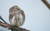 Η ανεπαρκής προστασία απειλούμενων πτηνών στέλνει τη Βουλγαρία στο Δικαστήριο τηςΕΕ