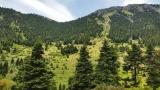 Τελευταία ημερίδα για την «Κωδικοποίηση της ΔασικήςΝομοθεσίας»