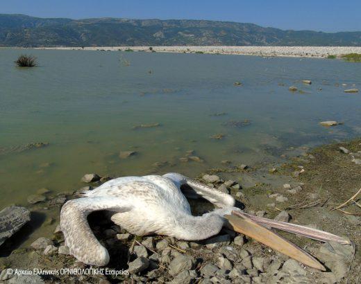 Εκατόμβη νεκρών πουλιών στη λίμνη Κάρλα