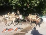 Σύλληψη τεσσάρων ατόμων για παράβαση της δασικήςνομοθεσίας