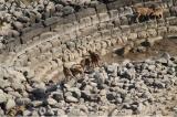 Δ/νση Δασών Κυκλάδων: σημαντική παρέμβαση για τους αιγάγρους τηςΑντιμήλου