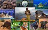 Ευρωπαϊκή Επιτροπή: Αναγκαίοι οι αυστηρότεροι κανόνες εμπορίας ειδών άγριας πανίδας καιχλωρίδας