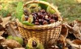 Συλλογή κάστανων και μανιταριών – Επιτρεπόμενεςποσότητες