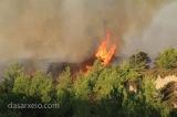 Περί δασικών πυρκαγιών