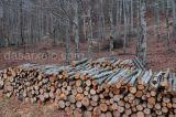 Γ. Τσιρώνης: Με το νόμο για τους δασικούς συνεταιρισμούς κλείνει ένας φαύλοςκύκλος