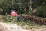 Εγκύκλιος: Διευκρινίσεις για θέματα παραχώρησης συστάδων σε δασικούςσυνεταιρισμούς