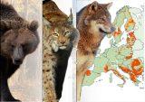 Η Ρουμανία απαγορεύει τοκυνήγι της αρκούδας, λύκου, λύγκα καιαγριόγατων