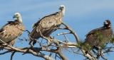 Εγκρίθηκε το Ειδικό Διαχειριστικό Σχέδιο του Εθνικού Πάρκου Δάσους «Δαδιάς–Λευκίμμης-Σουφλίου» (ΖώνηΑ)
