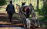 Τα καρτέλ του Μεξικού, η υλοτομία ενός δάσους και μια μικρήεπανάσταση