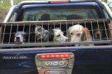 Ζάκυνθος: Άγνωστοι σκοτώνουνκυνηγόσκυλα