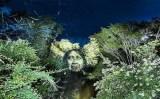 «Γκράφιτι»… στο δάσος της βροχής τουΑμαζονίου
